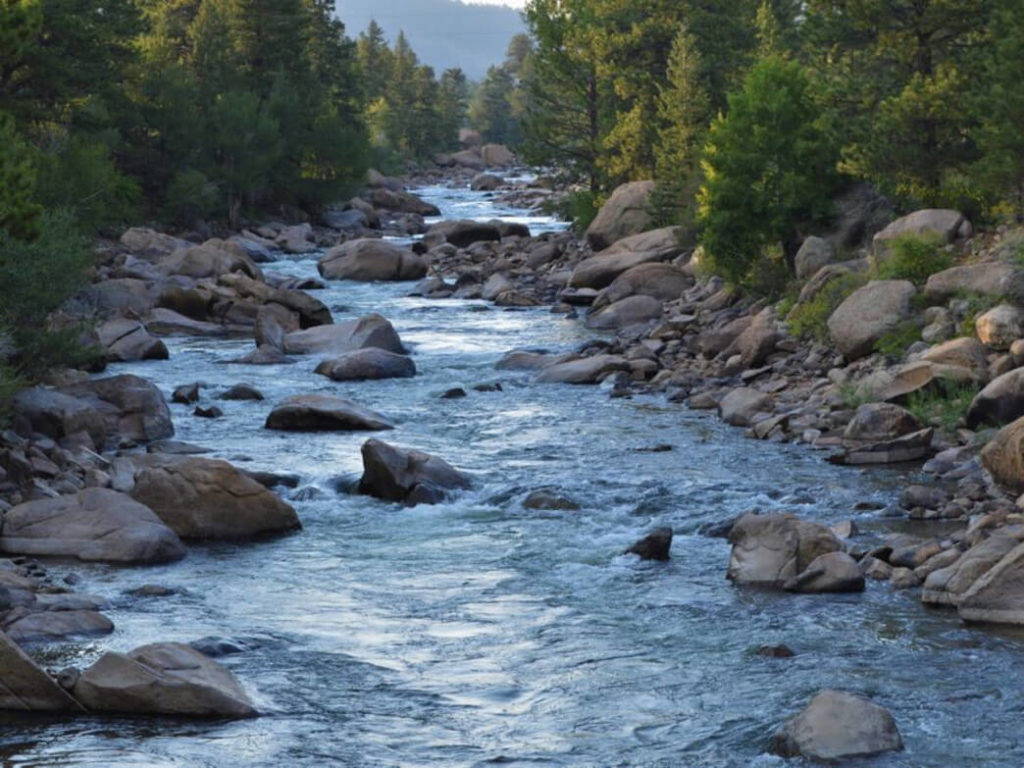 Arkansas River: Where the Brown Trout Reigns