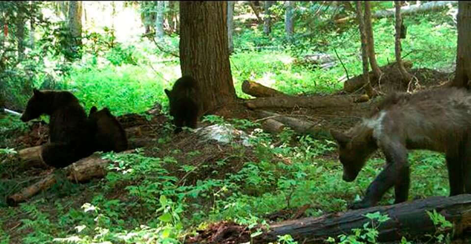 Encountering Wildlife